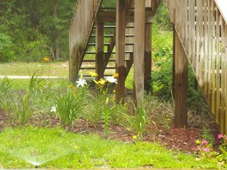Suwannee River house photo - Spring Time Flowers Abound