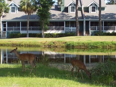 "Fripp Island's ""Official Welcome Committee"" - A Part of Everyday Life on Fripp!"