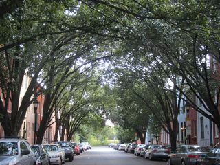 Baltimore house photo - Our beautiful tree-lined street from the house