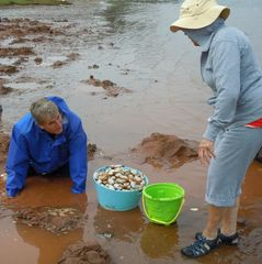 Panmure house photo - a bucket of clams from our beach for fresh clam chowder