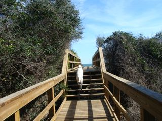 Walkover to the beach. Bring your dog! Pet friendly beach. Keep on leash. - St. Augustine house vacation rental photo