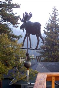 Moose weather vane