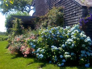 Water Mill house photo - Summer blooms on side of house