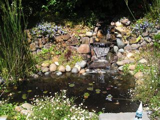 Tiburon house photo - Pond with soothing waterfall and gnome on guard.