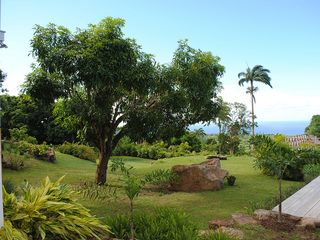 Gingerland villa photo - One of the Many Mango Trees in the Garden