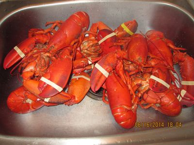 Lobstuhs! Mainer's word for lobsters. YUM!