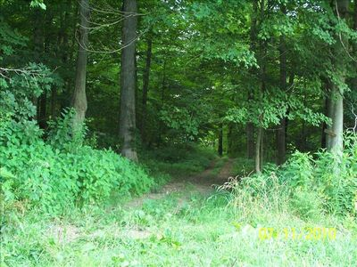 Lucas farmhouse rental - One of our hiking and riding trails through the woods