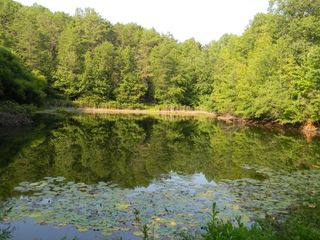 Hayesville cabin photo - Pond on road to home