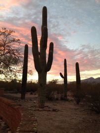 Tucson house rental - A beautiful Tucson sunset & the Sonoran Desert's famous saguaro cactuses