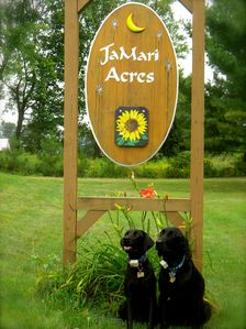 Luna and Luther JaMari's 'guard dogs'!