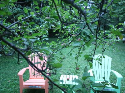 Backyard. Apple tree
