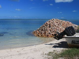 Bimini cottage photo - Conch Shells