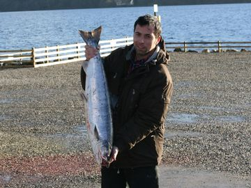 Salmon caught in Loch Tay in January 2009