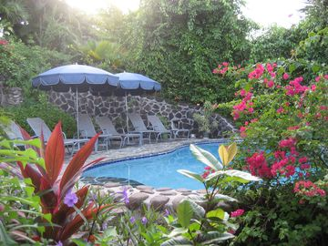 POOL SURROUNDED BY TROPICAL PLANTS AND BOUGAINVILLEA