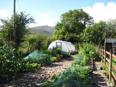 the organic vegetable garden