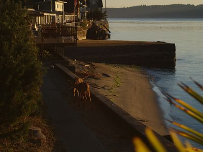 In the early mornings deer come to the beach.  Look closely for two fawn on path
