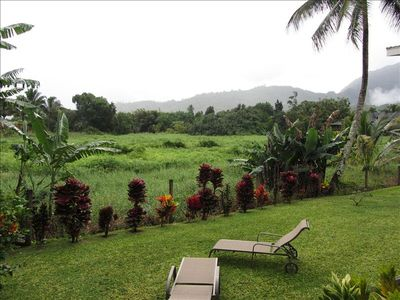 Back yard view of Hanalei Park.  Very private back yard