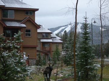 Winter Park townhome rental - Best of both worlds - nature and town! Can you see the Moose in our front yard?
