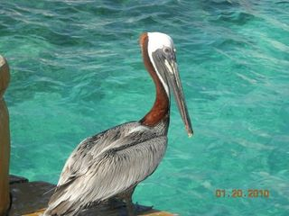 Cancun condo photo - A local visitor