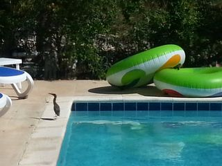 Sitting by the pool always provides great birdwatching!