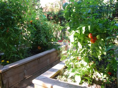 The summer garden offers a variety of herbs and juicy tomatoes.