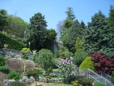 Rock garden with specimen plants with stairs leading down from parking space
