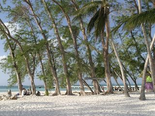 Grand Cayman condo photo - Rum Point Beach Club - Beach and Casuarina Trees
