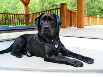 Pet Friendly-Our Black Lab Ruby Enjoying the Deck