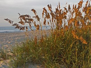 Horizon condo photo - Get in touch with nature...sea oats at sunrise