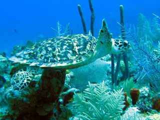 Grand Cayman condo photo - This guy was photographed directly in front of our unit