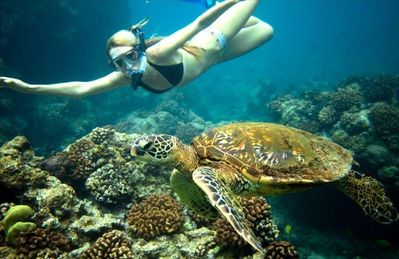 A common snorkeling encounter with a resident 'Honu' right in front of Hale Honu