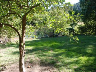 Russian River house photo - Backyard view from Gravenstein Apple tree (help yourself to a few!)