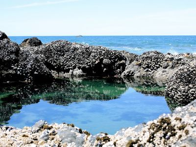 Lots of tide pools to explore within easy walking distance
