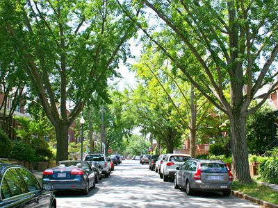 The Gencko tree-shaded street of 39th Place!