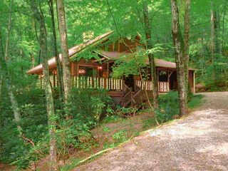 Dillard cabin photo - Spring And Summer Are Green And Lush At ''My Cabin In The Mountains''.