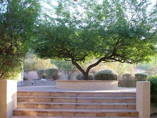 Goodyear house photo - Beautiful desert foliage leads up to private fenced in pool area