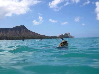 Waikiki Sea Turtle Surfing, Diamond Head in the background how cool!