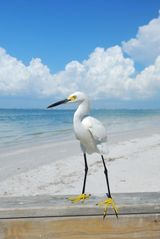 Sanibel Island condo photo - Pristine beach