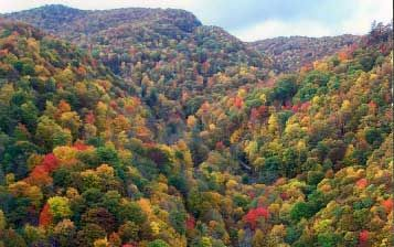 Fall Vally Color