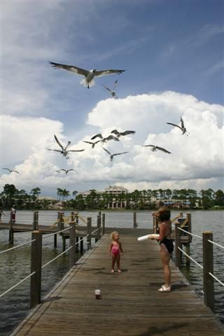 Feed the seagulls from the Pier.