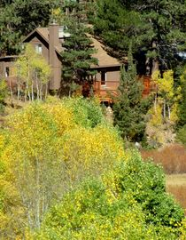 Markleeville cabin rental - Fall colors, river side of the cabin...