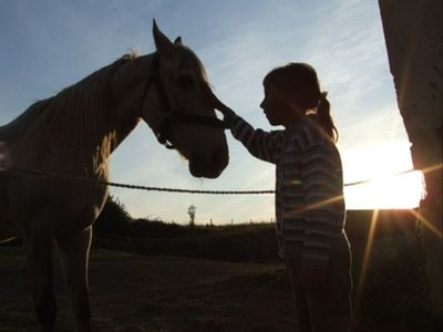 Horses and other animals for the whole family to enjoy, especially children.