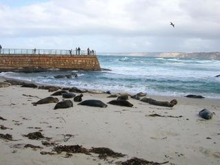 La Jolla cottage photo - Seal Beach, a 10 minute walk along the ocean from our cottage