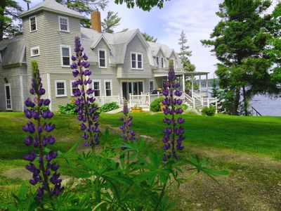 Green Landing, highlighted by lupines in June