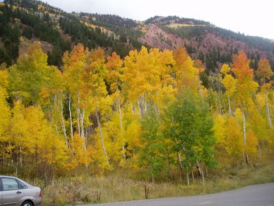 Colorado Aspens in the Fall. Gorgeous!
