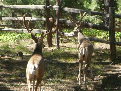 We often have deer, fox, squirrel, all manor of birds, etc. in our back yard.