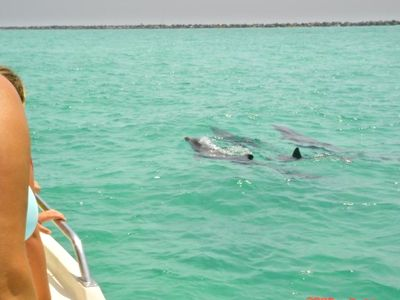 Destin Pass Dolphin Watching
