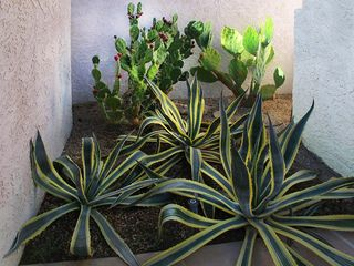 Indian Wells house photo - Century plants and prickly pear cactus.
