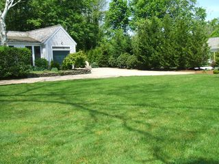 Barnstable house photo - Lawn is surrounded by privet