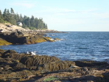 Short walk 100 feet to ocean from cottage, seals rest on rocks